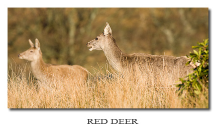 Photo Gallery ~ Red Deer